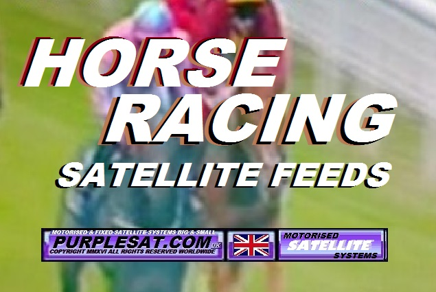 horse racing feeds purplesat